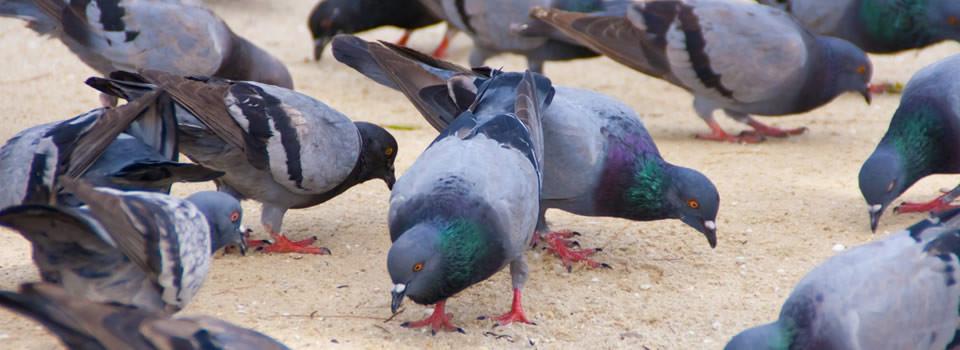 Aldine bird control