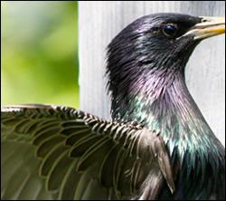 bird control Watauga