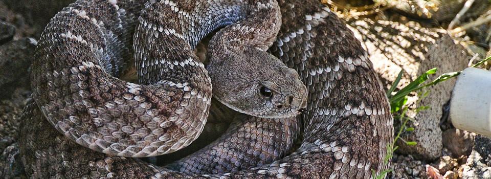 Aldine snake control