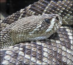 snake removal Watauga